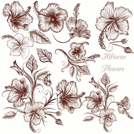 ibiscus: Insieme di mano vettore fiori di ibisco