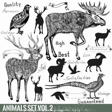 animals collection: Collection of vector hand drawn detailed wild animals