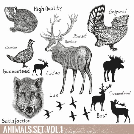 isolated animal: Collection of vector hand drawn detailed  forest animals