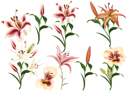 Collection of realistic and beautiful vector lily flowers in watercolor style