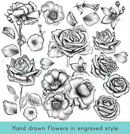 Een collectie van hoge gedetailleerde vector met de hand getekende roos bloemen in vintage gegraveerde stijl Vector Illustratie