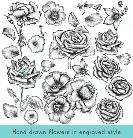 Una colección de alta vectorial detallada mano dibujado flores color de rosa en el estilo de grabado de la vendimia Ilustración de vector