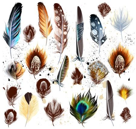 pluma: Colecci�n de vectores de plumas de colores realistas