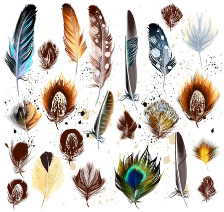 Collection of vector colorful realistic feathers