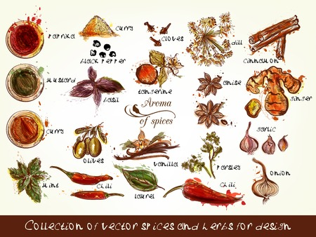 A collection of vector spices and herbs chili, vanilla, curry, mint, dill, parsley, anis and many other in engraved and watercolor styles