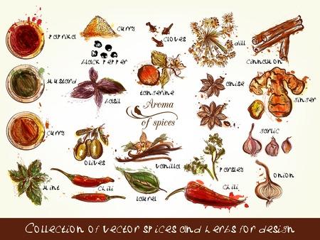 curry: Una colección de especias y hierbas vector de chile, vainilla, el curry, la menta, el eneldo, perejil, anís y muchos otros estilos en acuarela y grabados