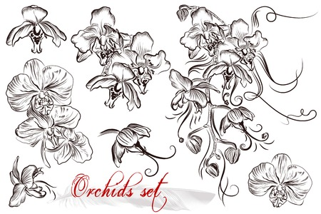 foliate: Set of vector hand drawn orchids flowers in engraved vintage style