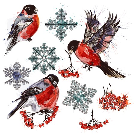 Christmas collection of bullfinch birds, snowflakes and rowan in watercolor style
