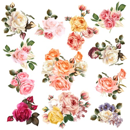 cute: Mega collection of vector  high detailed realistic rose flowers on white for design