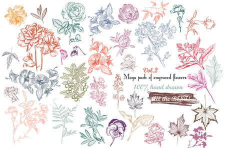 scroll: Mega collection of vector  high detailed engraved flowers and leafs 100% hand drawn