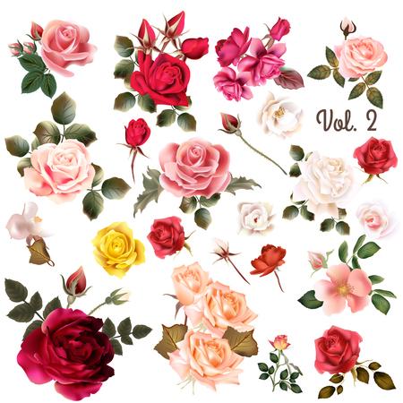 casados: Mega colección de vector de alta detallada realista flores color de rosa en blanco para el diseño