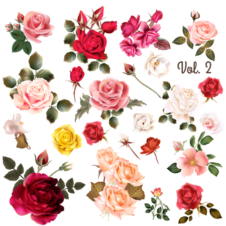 rose: Mega collection of vector  high detailed realistic rose flowers on white for design