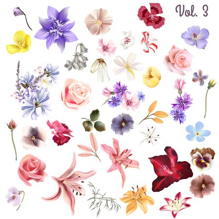 デザイン白ベクトル高の詳細な現実的な野の花のメガコレクション 写真素材 - 47488279