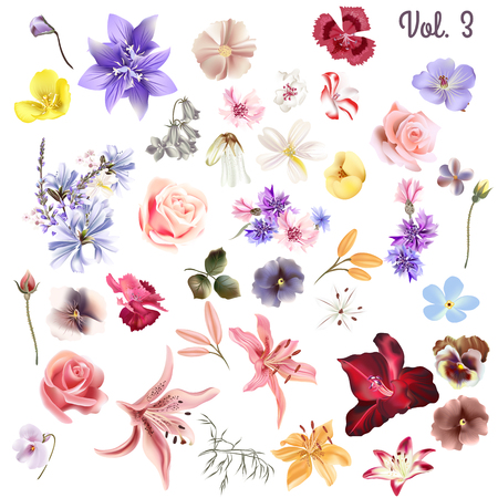 Mega collection of vector  high detailed realistic field  flowers on white for design