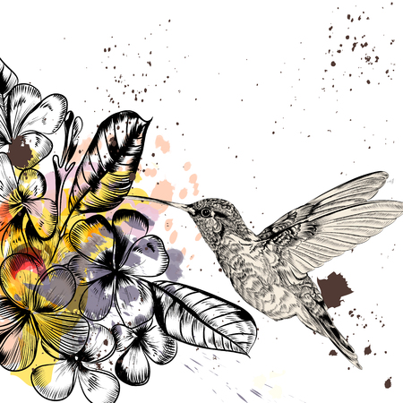 hummingbird: Background with tropical flowers and hummingbird in engraved and watercolor styles Illustration