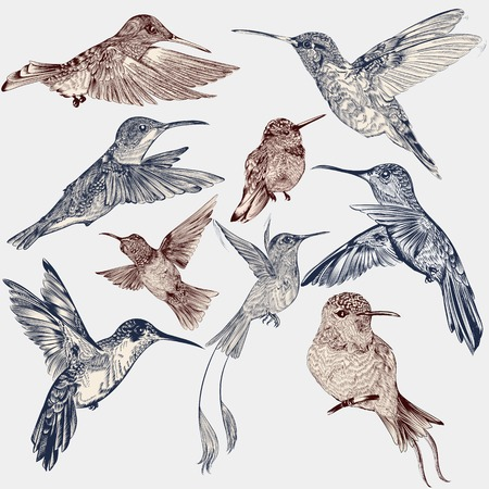 Collection of vector decorative hummingbirds in vintage engraved style