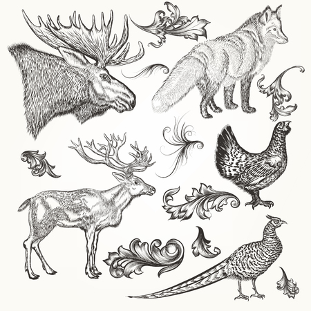 animals collection: Collection or set of vector detailed hand drawn animals in vintage style for design