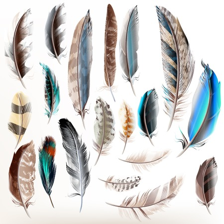 feather background: Big set or collection of detailed bird feathers in realistic style