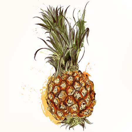 inked: Beautiful background with pineapple drawn in engraved and watercolor styles realistic illustration Illustration