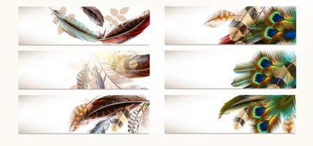 clean air: Big set or collection of  feather  backgrounds or templates for design Illustration