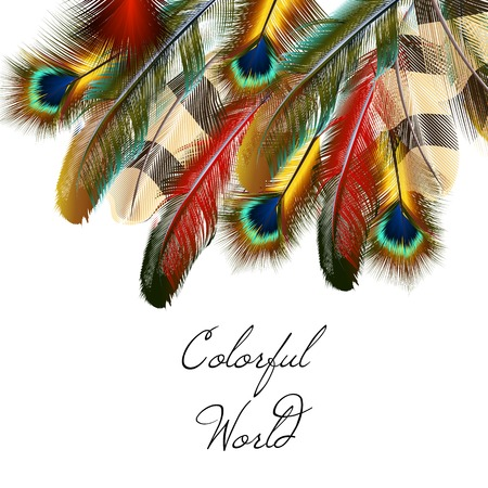 Colorful feather vector background