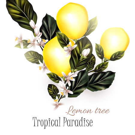 Lemon tree branches illustration  with lemons leafs and flowers on white background