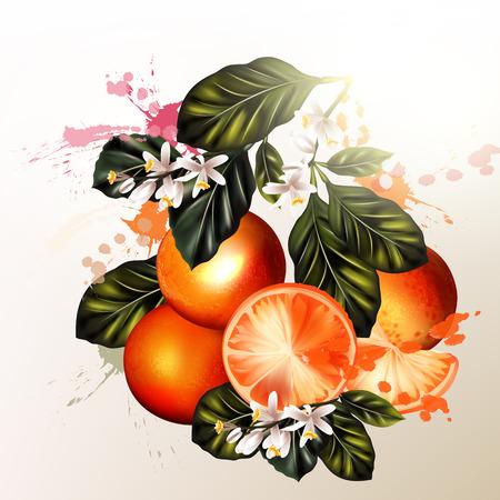 Fresh vettore arance realistici con foglie macchie e fiori