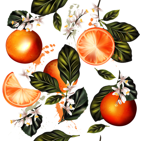naranja arbol: De fondo sin fisuras hermosa con las naranjas vector realista para el diseño