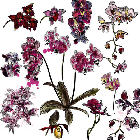 orchid: Big set or collection of vector hand drawn orchid and lily flowers in engraved style with watercolor spots
