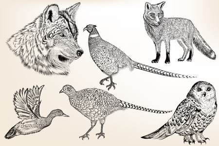 animals collection: Collection of vector hand drawn animals in engraved vintage style for design Illustration