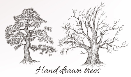cedar tree: Set or collection from two  filigree trees