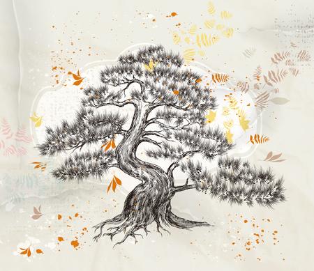 cedro: árbol en el estilo de grabado detalla Vectores