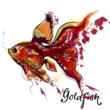 aquaculture: Beautiful vector hand drawn goldfish in engraved and watercolor style Illustration