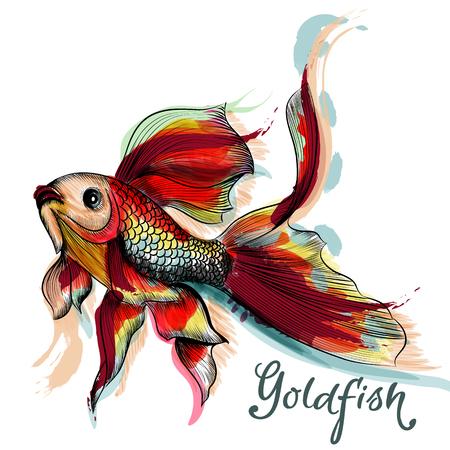 Bella mano vettore pesci rossi disegnato in stile acquerello incisi e