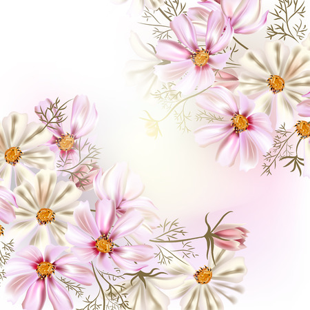 cosmos: Background or illustration with cosmos  flowers very light and pastel colors
