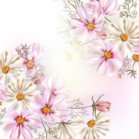 kosmos: Hintergrund oder Illustration mit Blumen Kosmos sehr leicht und Pastellfarben