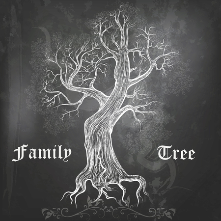 Chalkboard background with hand drawn vector oak family tree Illustration
