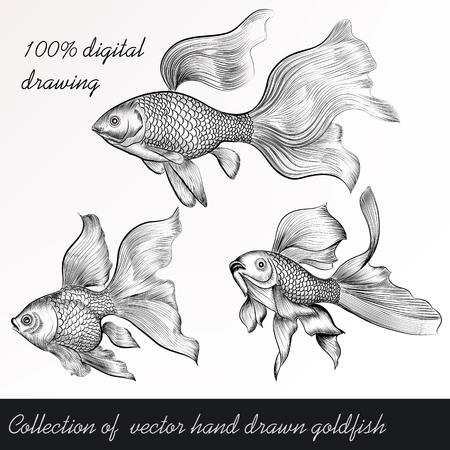 goldfish: A collection or set of vector hand drawn goldfish in engraved vintage style