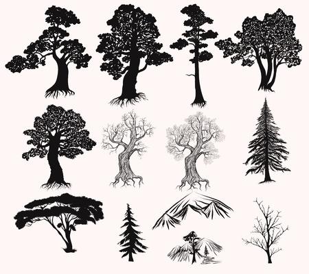 Collection ou un ensemble de main dessiné des arbres détaillés silhouettes arbre chêne pin de fourrure et d'autres