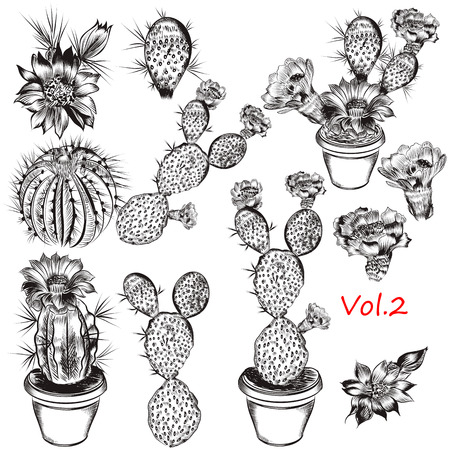 pot plant: A collection of carefully hand drawn cactuses in engraved style for design