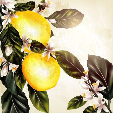 citrus tree: Grunge vector background with blooming lemon in vintage style