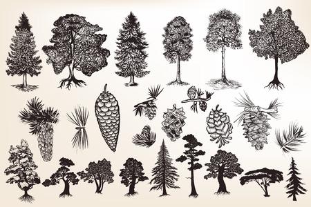 dessin noir et blanc: Big collection ou un ensemble d'arbres dessinés à la main dans un style gravé Illustration