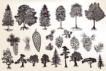 Big collection or set of hand drawn trees in engraved style Vettoriali