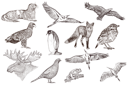 animal silhouettes: Collection of filigree drawn animals in engraved style
