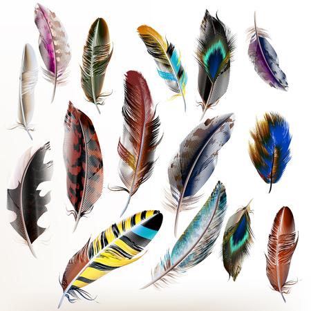 Vector set di piume di uccelli dettagliate in stile realistico