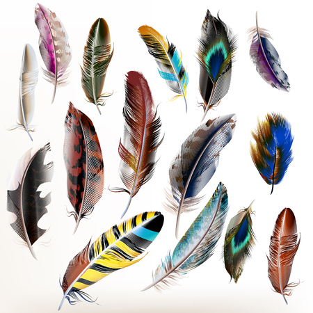 bird feathers: Vector set of  detailed bird feathers in realistic style