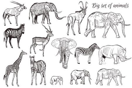 Mega Collection o conjunto de vector dibujado a mano animales detallados antílope jirafa elefante de la sabana tema de cebra