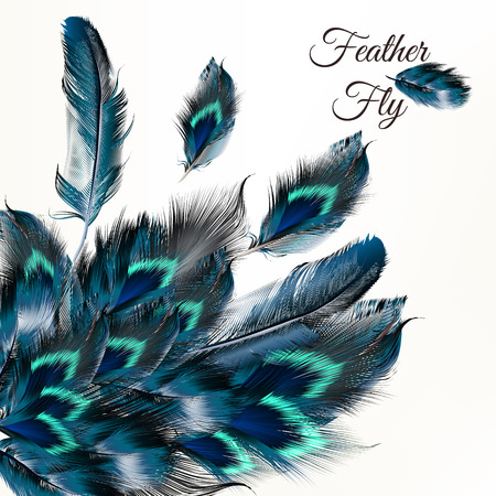 white feather: Fashion vector background with blue feathers  in realistic style for design