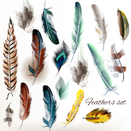 A collection or set of detailed bird feathers in realistic style