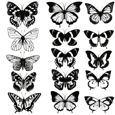 monochromic: A collection of vector realistic butterflies in black color